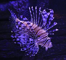 Lion Fish by Pixel-Bug