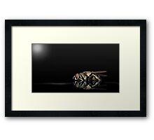 Super Flies 01 Framed Print