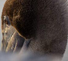 Pelican Pretty Sticker