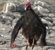Chimpanzee Vulture by Felfriast