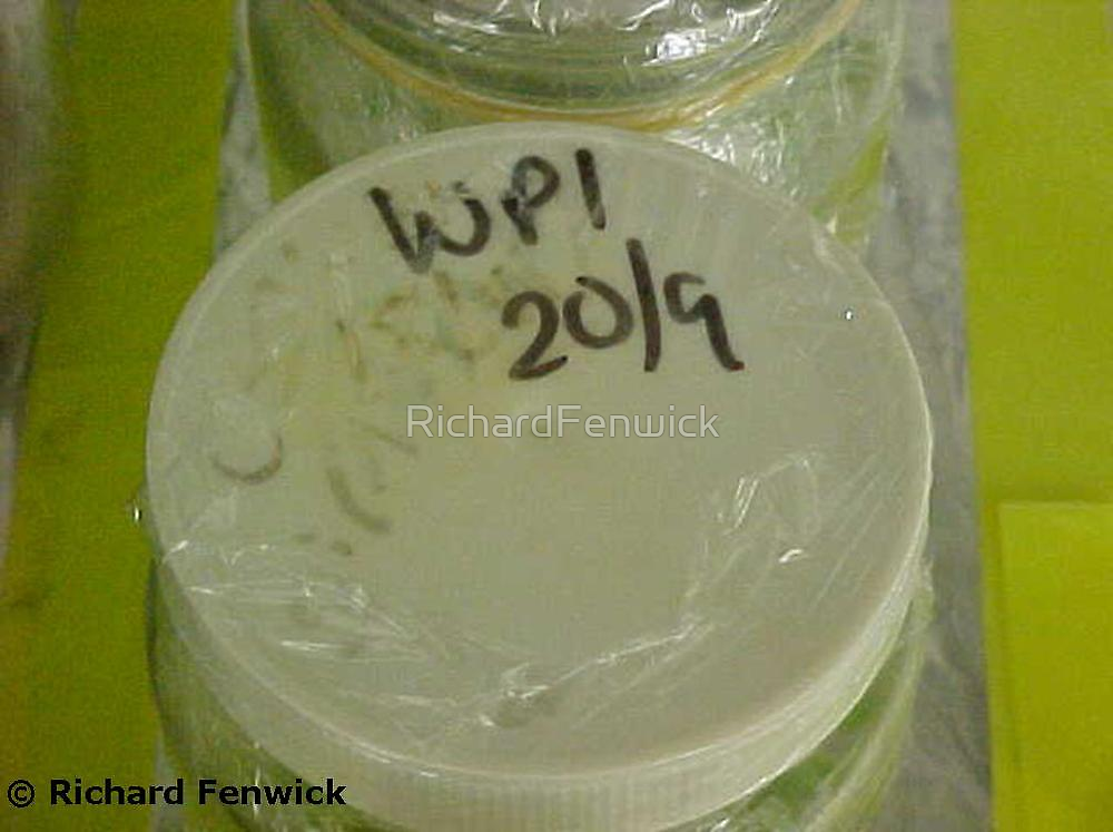 Solid white micropropagation cap by RichardFenwick