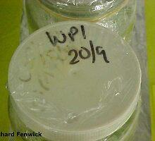 Solid white micropropagation cap by RichardFenwick