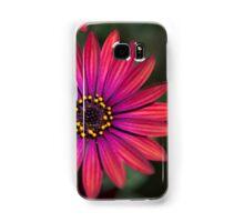 Osteaspermum 'Elite Ruby' Flowers Samsung Galaxy Case/Skin