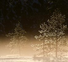 21.1.2013: Cold, Beautiful Morning II by Petri Volanen
