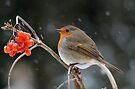 Robin in winter I by Peter Wiggerman