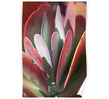 Succulent Paddles Poster