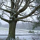 The Oak in Winter by Valerie Howell