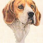 Beagle Portrait by BarbBarcikKeith