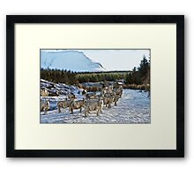 Sheep Watching in the Snow Framed Print