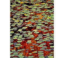 Upton Frog Pond Reflection Photographic Print