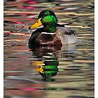 Duck- Mallard Male 2013 by Dennis Stewart