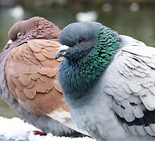 Lakeside Pigeons by lmaiphotography