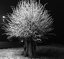 Frozen Tree by Moments In Time Photography