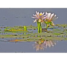 Lilies on Parry's Lagoon Photographic Print