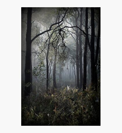 Clutching by Lorraine McCarthy Photographic Print