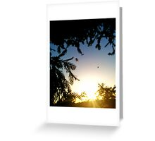 Spider-Web Sunset Greeting Card