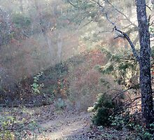Forest Dawn by Paul Sturdivant
