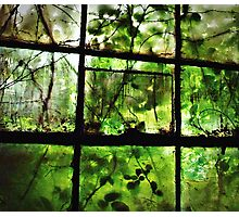 Green Leaves On Window l Photographic Print