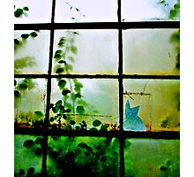 Green Leaves On Window ll Photographic Print