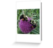 Two Bumble Bees On Bull Thistle Greeting Card