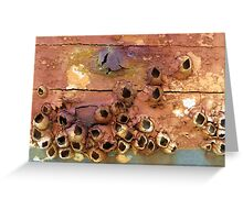 Empty Barnacle Shells On an Old Boat Greeting Card