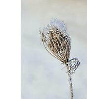 The Ice Queen ~ Photographic Print