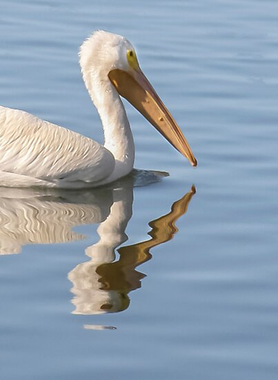 Pelican Abstract! by heatherfriedman