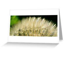 Seed Head Greeting Card
