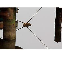 Copper X Photographic Print