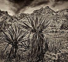Barren Land by StephanKolb