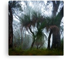 Grass Trees in the Mist Canvas Print