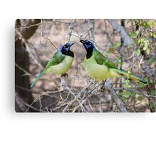 Loving Green Jays Canvas Print