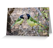 Loving Green Jays Greeting Card