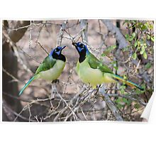 Loving Green Jays Poster