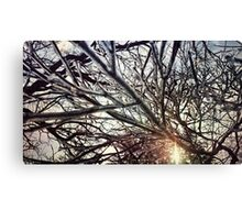 Frozen I Canvas Print