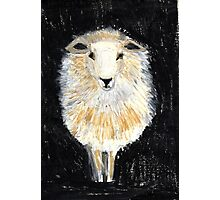 One Sheep.. Photographic Print