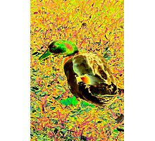 Cute brightly colored duck Photographic Print