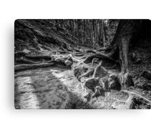 Twisted roots Canvas Print