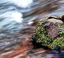 Down Stream by Phillip M. Burrow