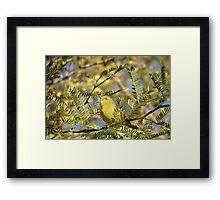 Orange-crowned Warbler Framed Print