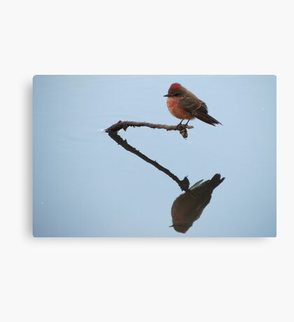 Vermilion Flycatcher (Reflections of Tranquility)  Canvas Print