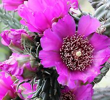 Purple Cholla by Paul Sturdivant