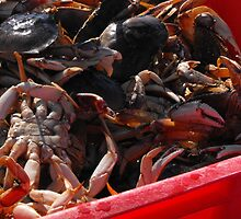 The crabs in, lets have a crab feed. by Carolynn Cumor