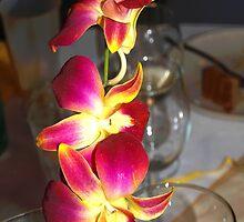 Orchid sprig by ♥⊱ B. Randi Bailey