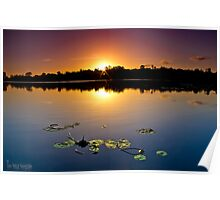 lily pad sunset Poster