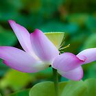 Lotus by Renee Hubbard Fine Art Photography