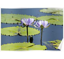 Water Lillies No. 1 Poster