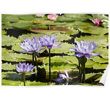 Water Lillies No. 2 Poster