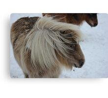 Shetland Pony, horse,snow Canvas Print