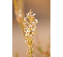 Spring in Drakensberg Photographic Print